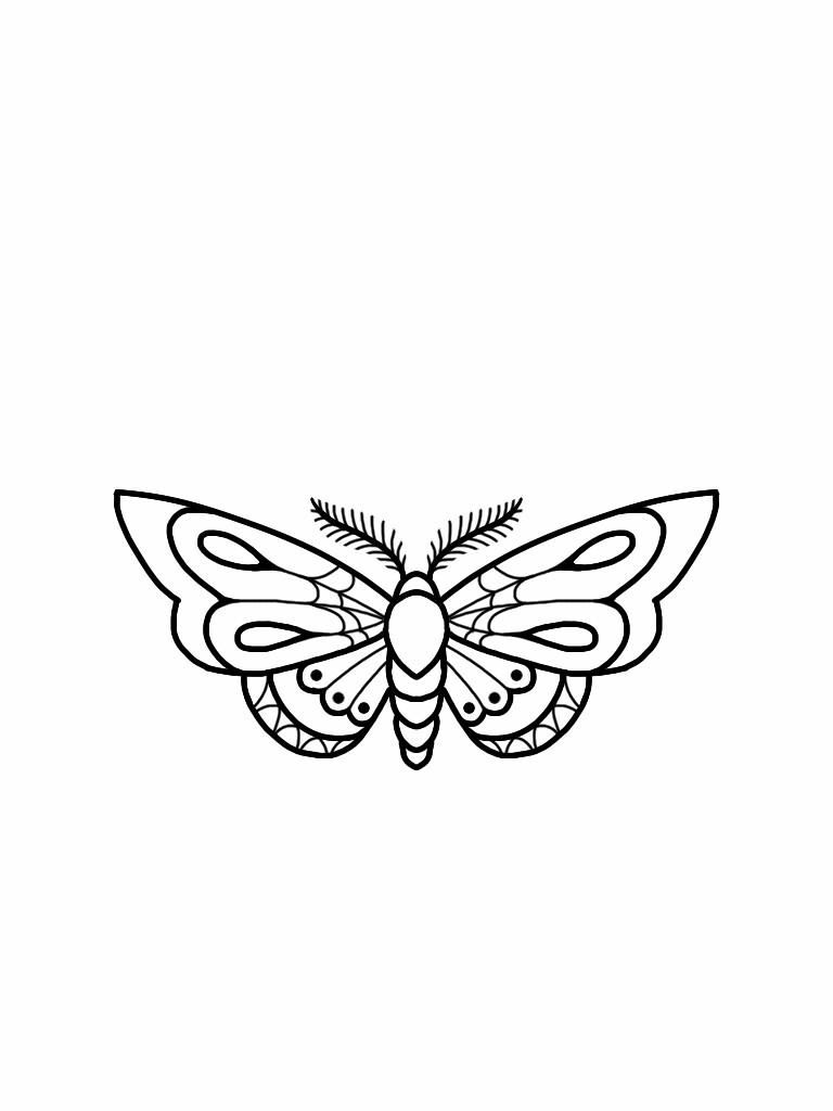 768x1024 Moth Tattoo Flash Design Tat Moth Tattoo, Flash