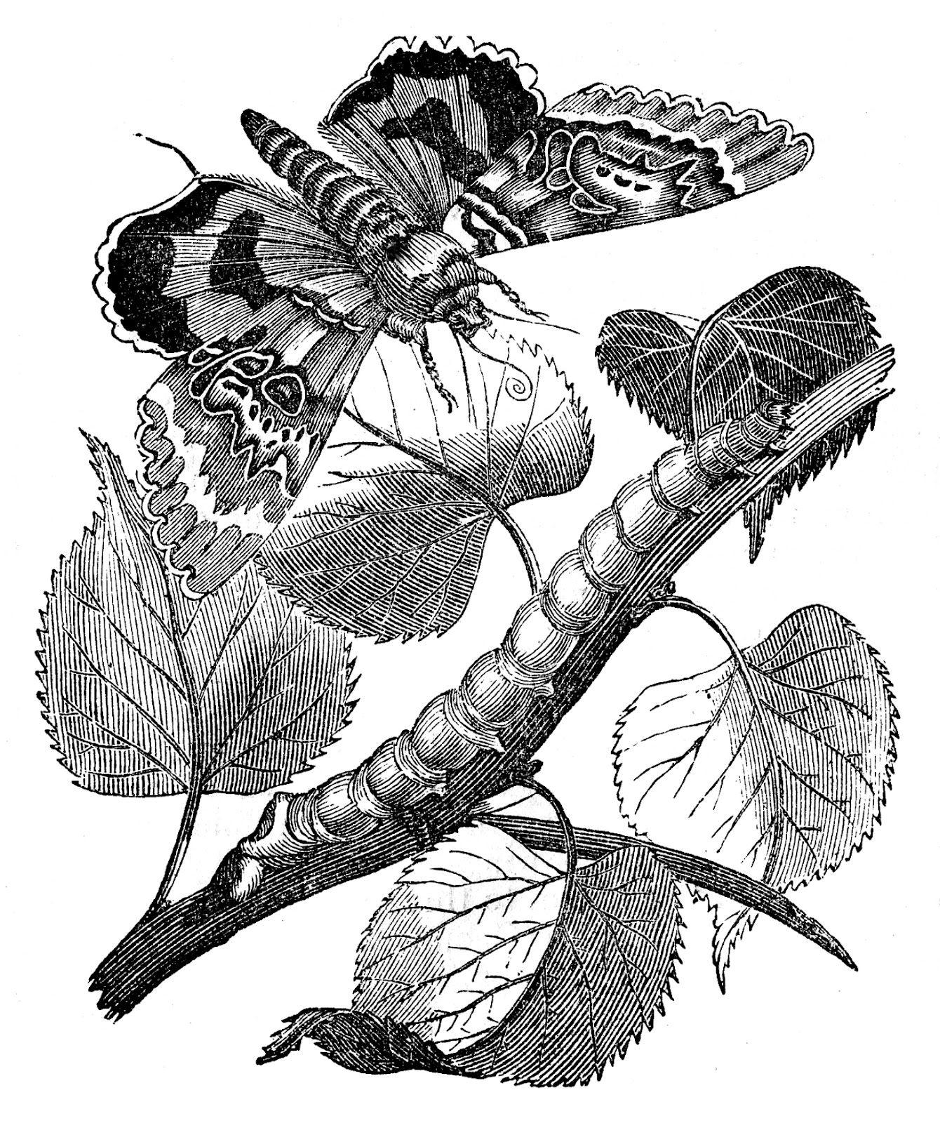 1340x1600 Natural History Image