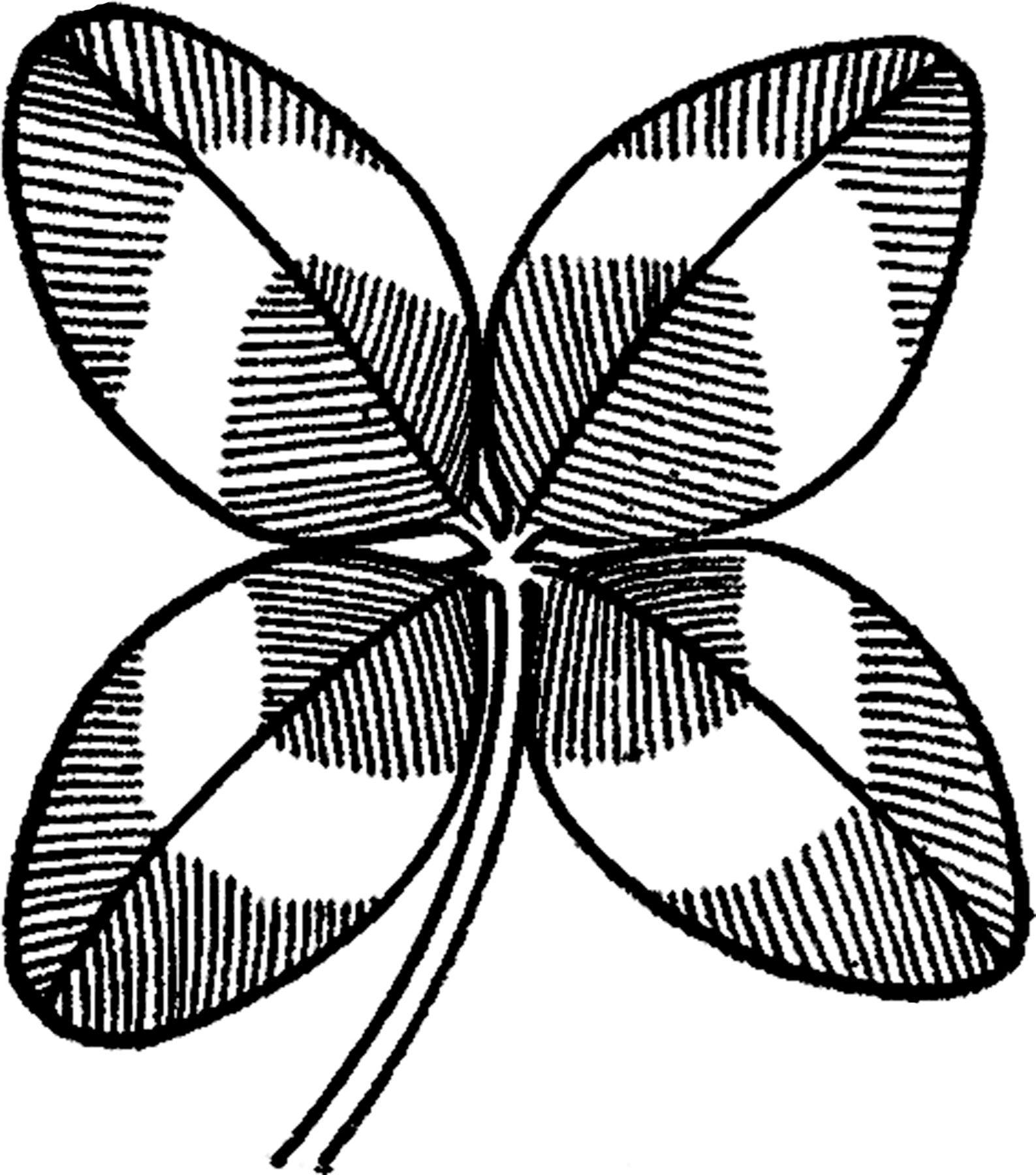 1587x1800 Vintage Four Leaf Clover Image Leaf Clover, Leaves And Graphics