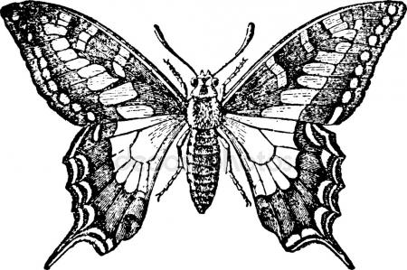 450x299 Vintage Drawing Butterfly Stock Photo