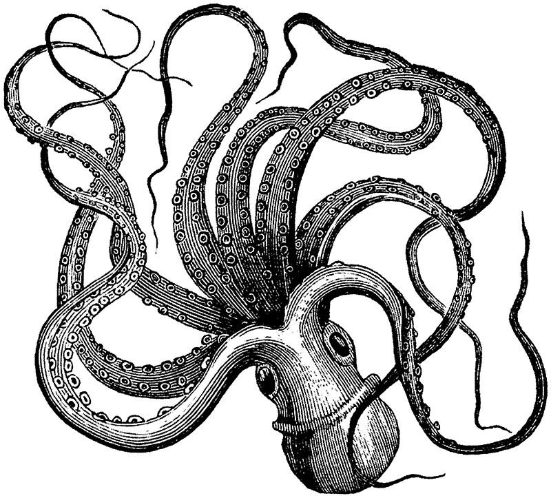 800x723 Vintage Octopus Stickers By Jen Dixon Redbubble
