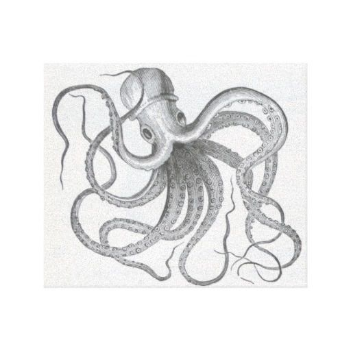 512x512 Vintage Octopus Sketch Sketches And Drawings