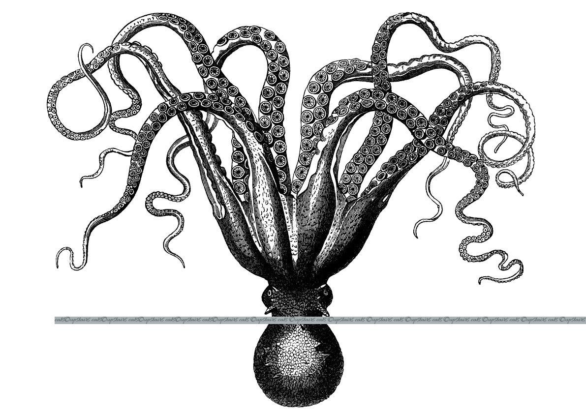 1191x842 Xl Vintage Octopus