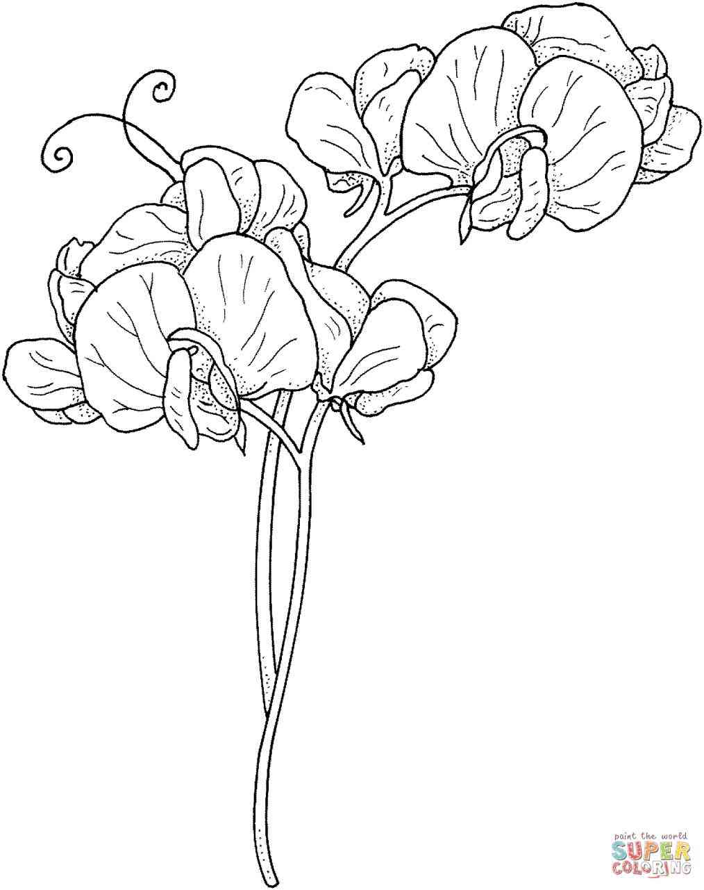 1014x1281 Single Black Rose Drawings Images Vintage Floral Highly Detailed