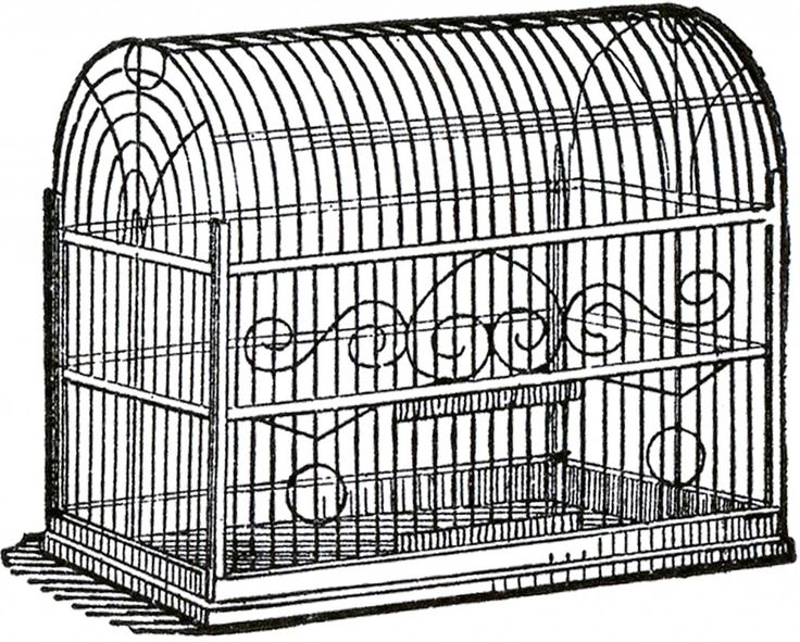 736x591 117 Best Cage Images On Bird Cages, Bird Cage