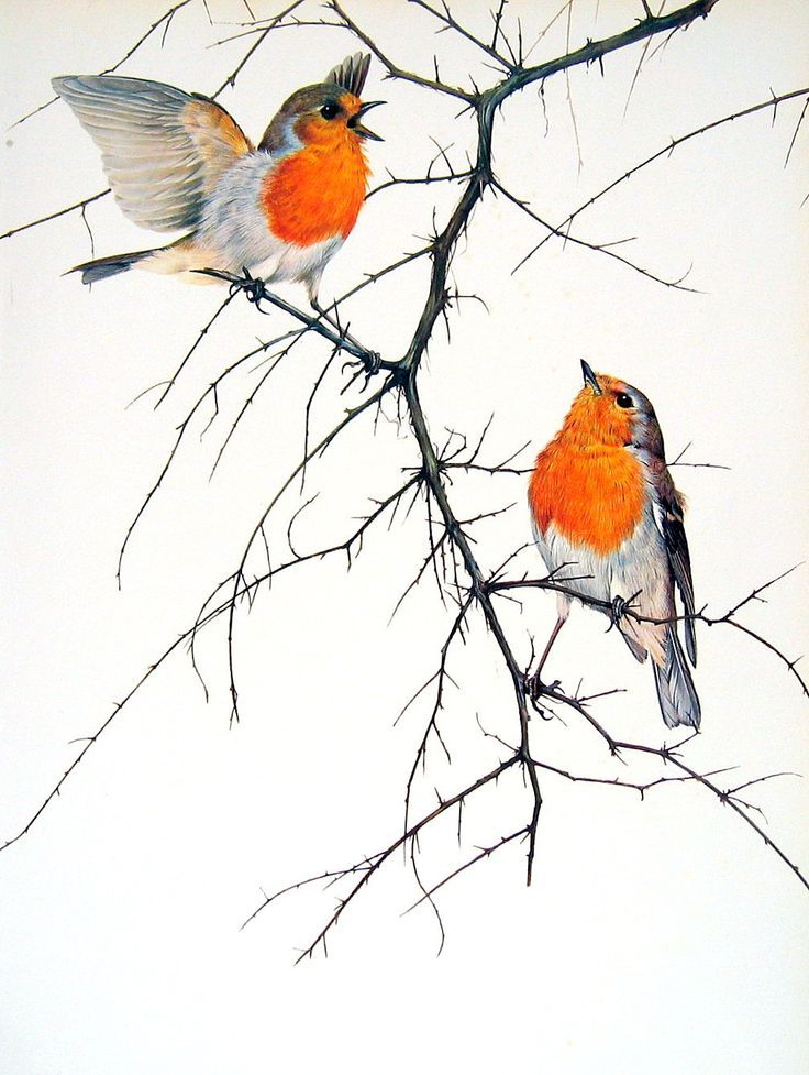 736x977 33 Best Birds And Things Images On Birds, Colourful