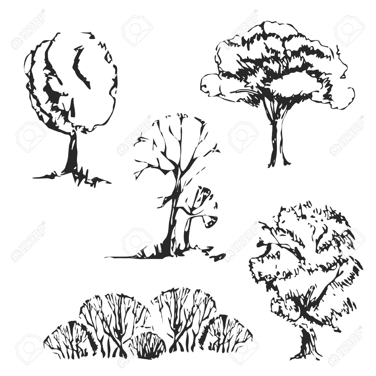 1300x1300 Hand Drawn Trees Set. Isolated And Vintage Sketch Trees. Royalty