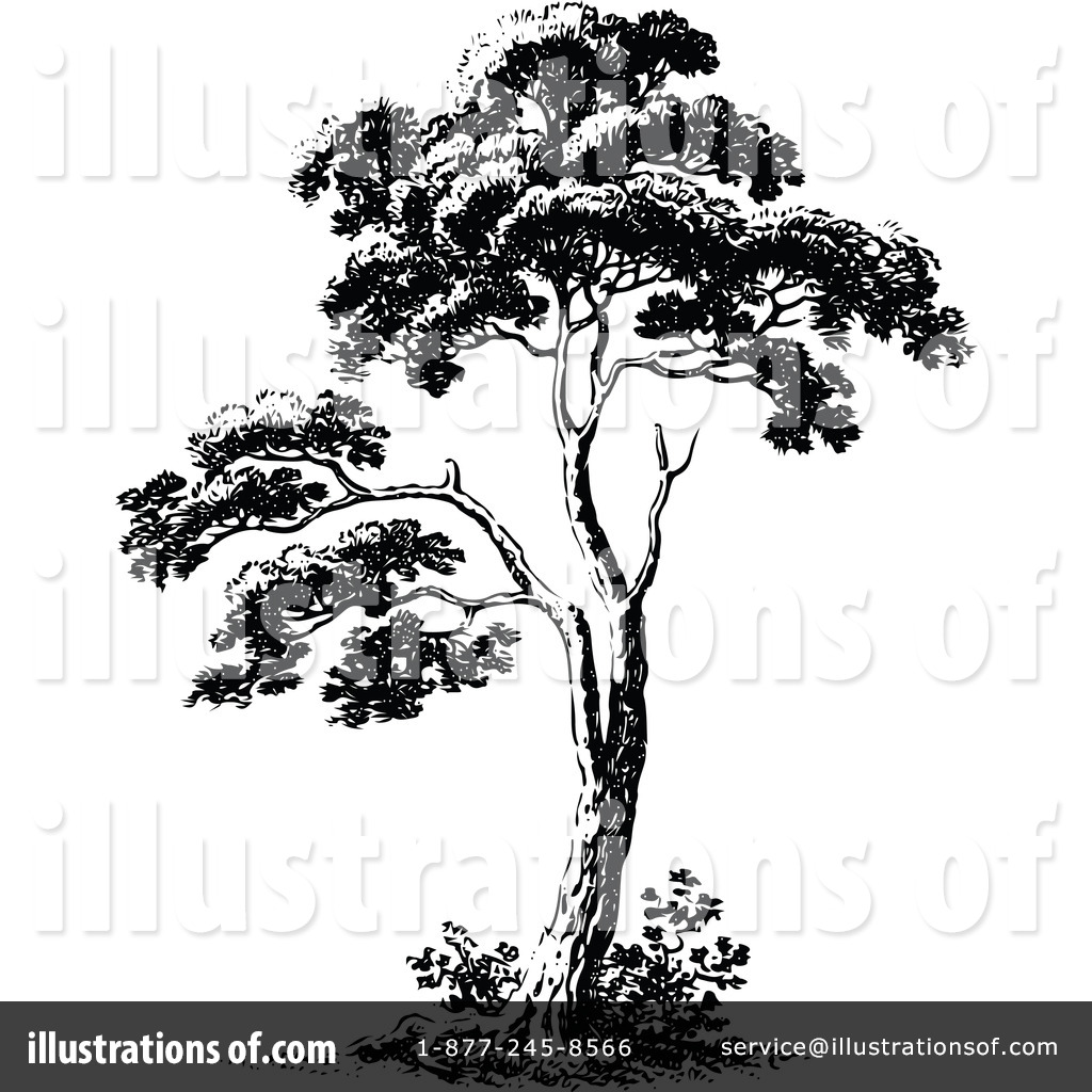 Vintage tree drawing at getdrawings free for personal use 1024x1024 tree clipart altavistaventures Images