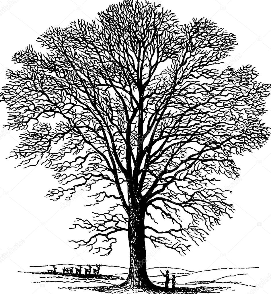 945x1024 Vintage Drawing Tree Stock Photo