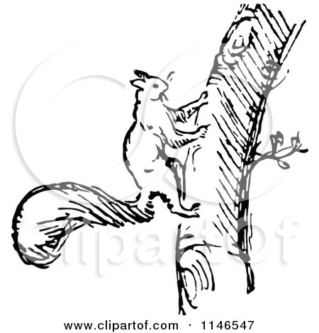 450x470 Clipart Of Retro Vintage Blacknd White Squirrel Climbing