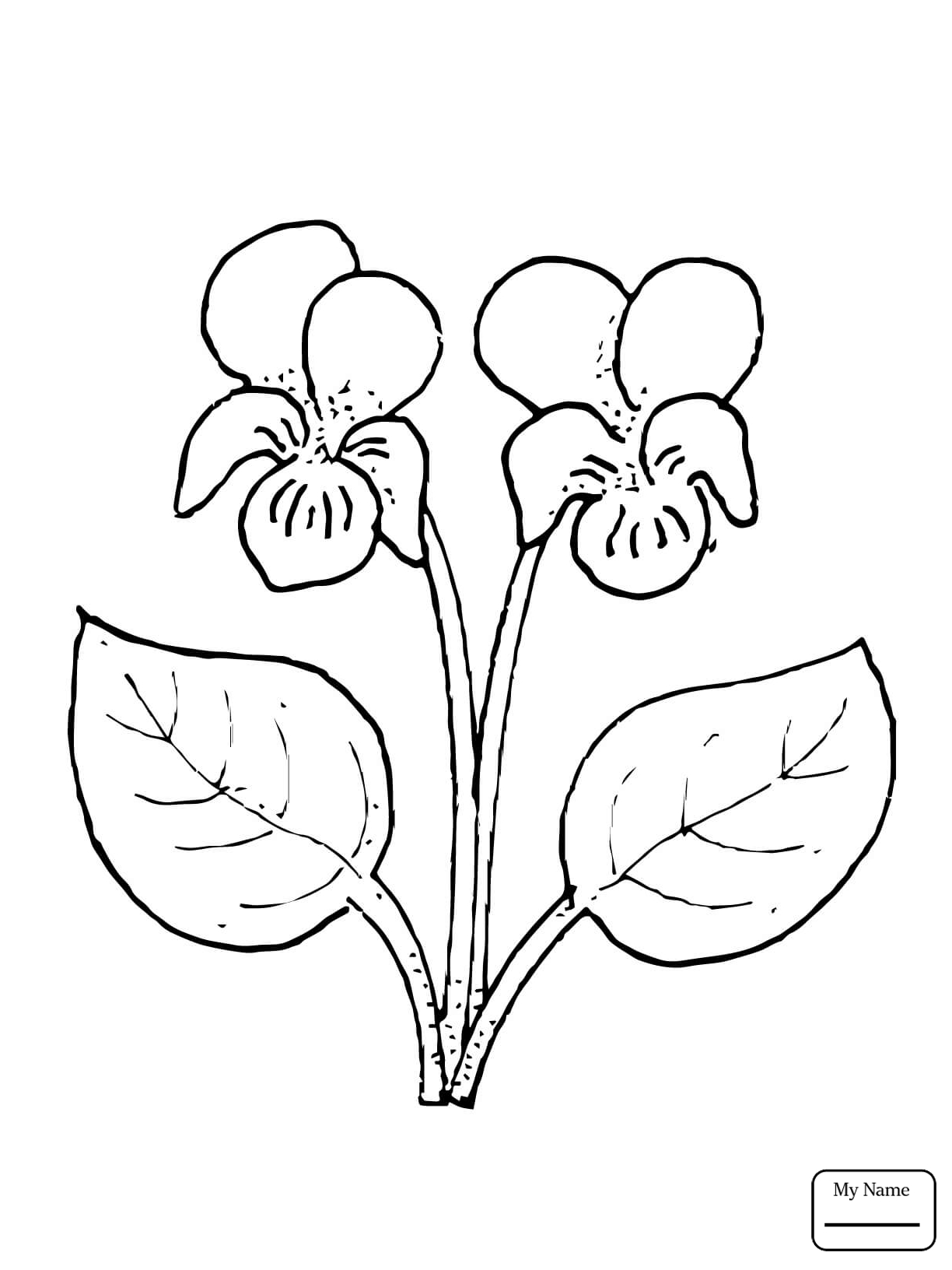 1224x1632 Flowers Heartsease Viola Tricolor Flower Coloring Pages For Kids