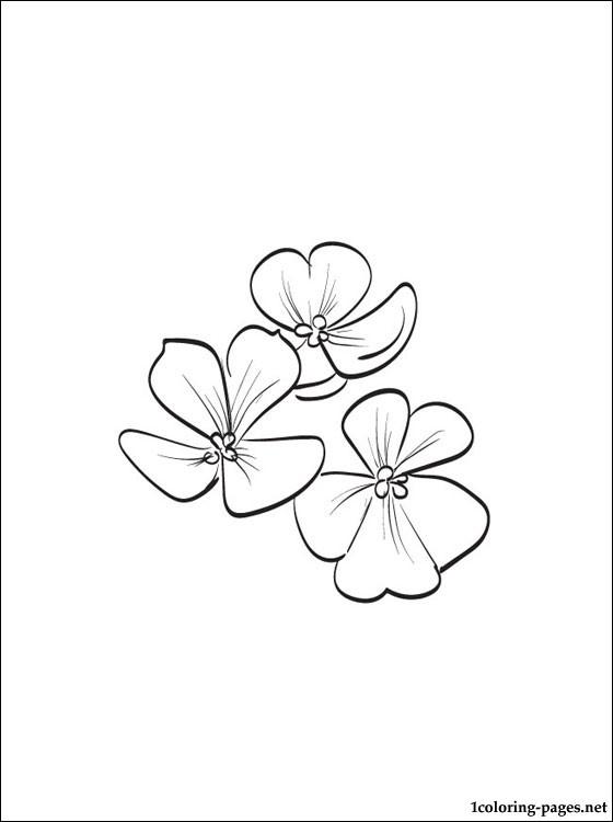 Violet Flower Coloring Page