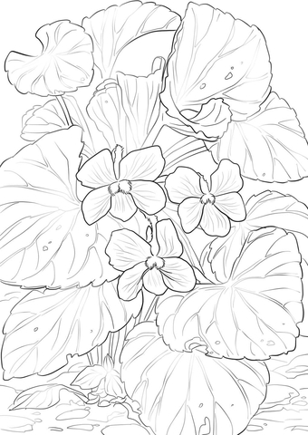 340x480 Wood Violets Coloring Page Free Printable Coloring Pages