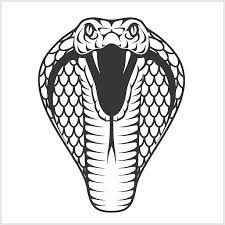 Viper Drawing