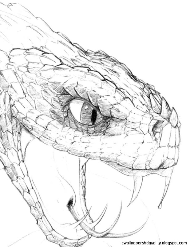 618x800 Snake Head Drawings Wallpapers Hd Quality