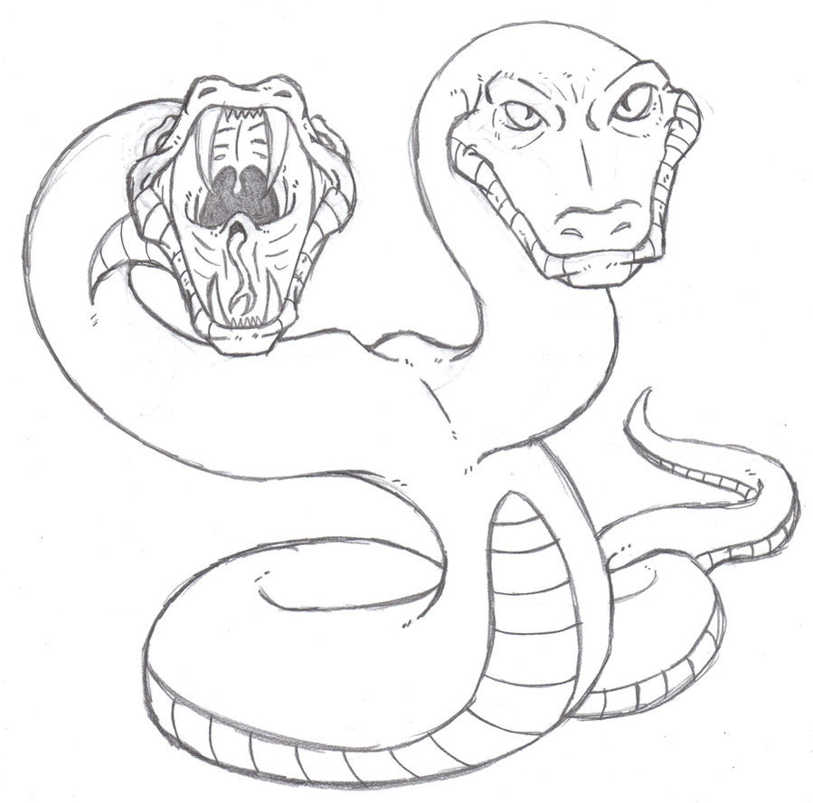 899x888 Twin Headed Python By Phycosmiley