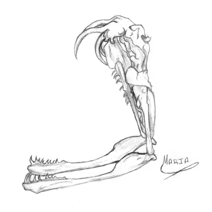 900x900 Gaboon Viper Skull By Charlysombrerowearer