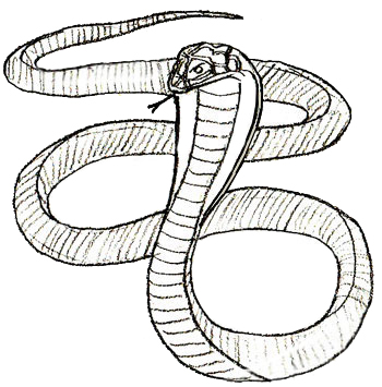 350x355 How To Draw A Snake