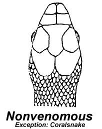 204x257 Non Venomous Snakes