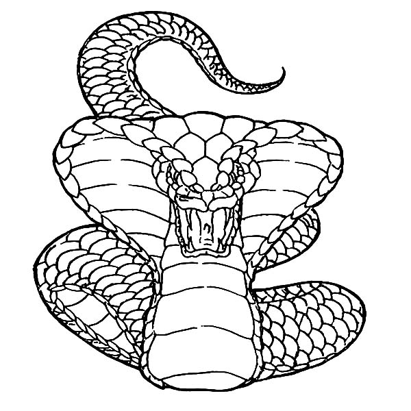 cobra coloring pages online | Viper Snake Drawing at GetDrawings.com | Free for personal use Viper Snake Drawing of your choice