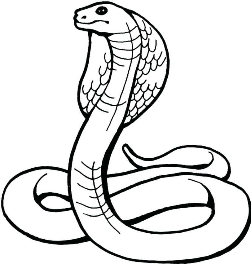 810x852 Snake Coloring Picture Viper Snake Coloring Page Snake Coloring
