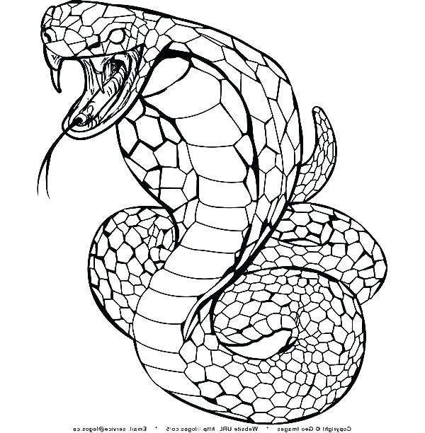 snake outline coloring pages - photo#34