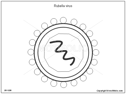 500x375 Rubella Virus Illustrations