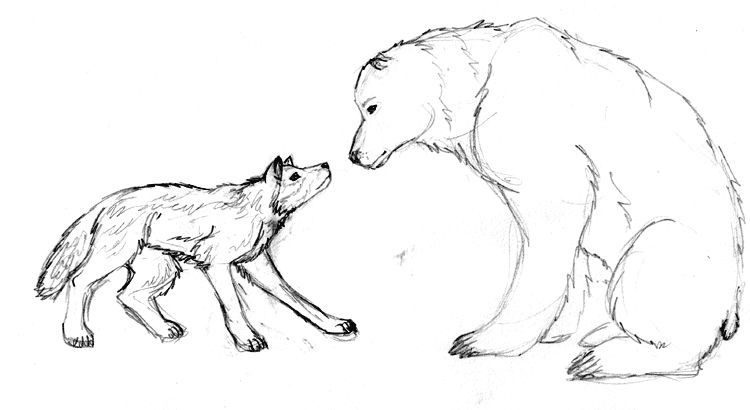 750x410 Bear And Wolf Drawings Wolf Vs Bear Drawings Wolf And Bear By