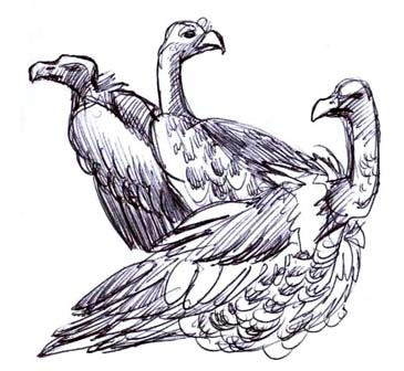 Vultures Drawing