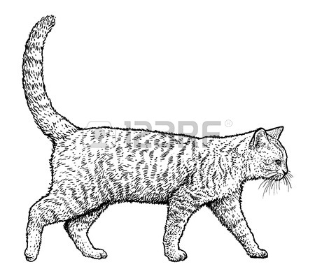 Walking Cat Drawing