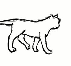 236x217 The Gait Of A Cat Walking To The Right Side. Right Rear, Right