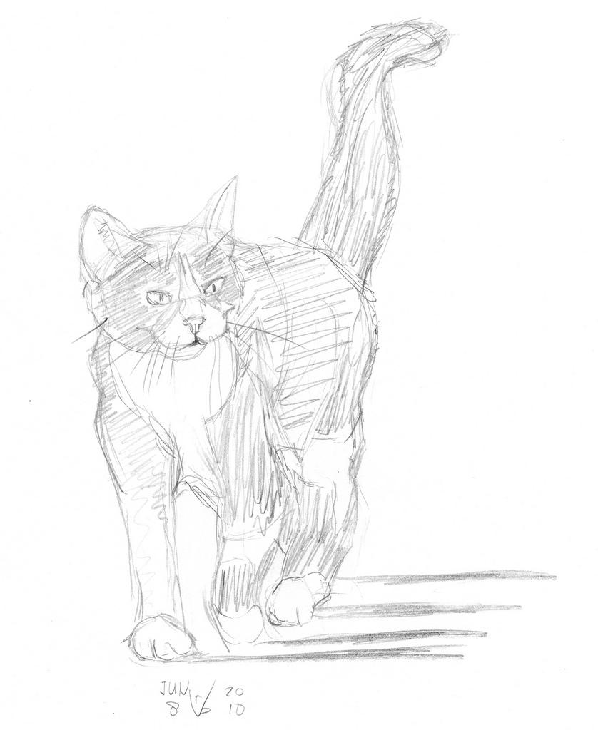 838x1024 Walking Cat, Drawn On June 8, 2010 So I'Ve Taken Two