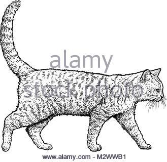 329x320 Head Cat. Sketch. Vector Illustration Stock Vector Art