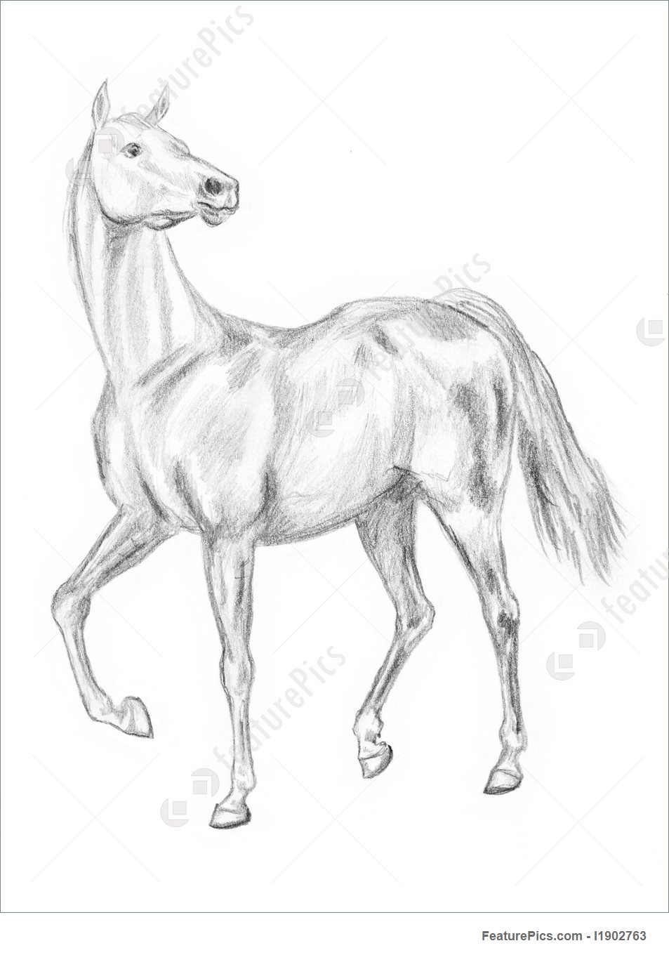 953x1360 Picture Of Walking Horse Drawing