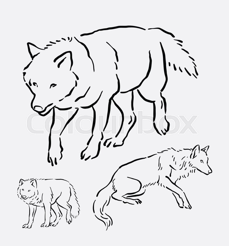 746x800 Wolf Walking Pose Hand Drawing. Good Use For Symbol, Logo, Web