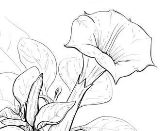 340x270 Verbena Flower Art Floral Art Pen And Ink Ink Drawing