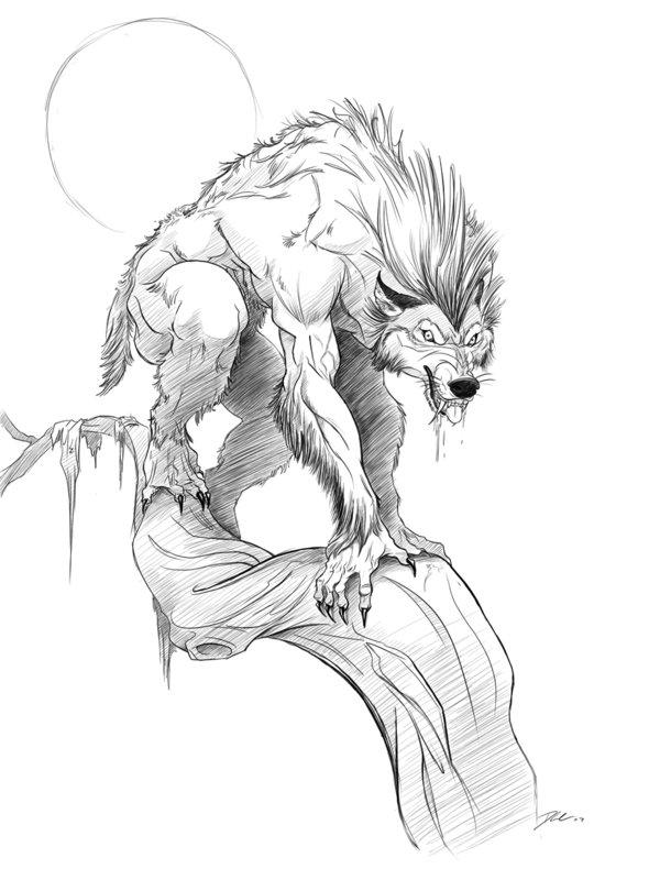 600x800 Werewolf .good Times By Davidsdoodles