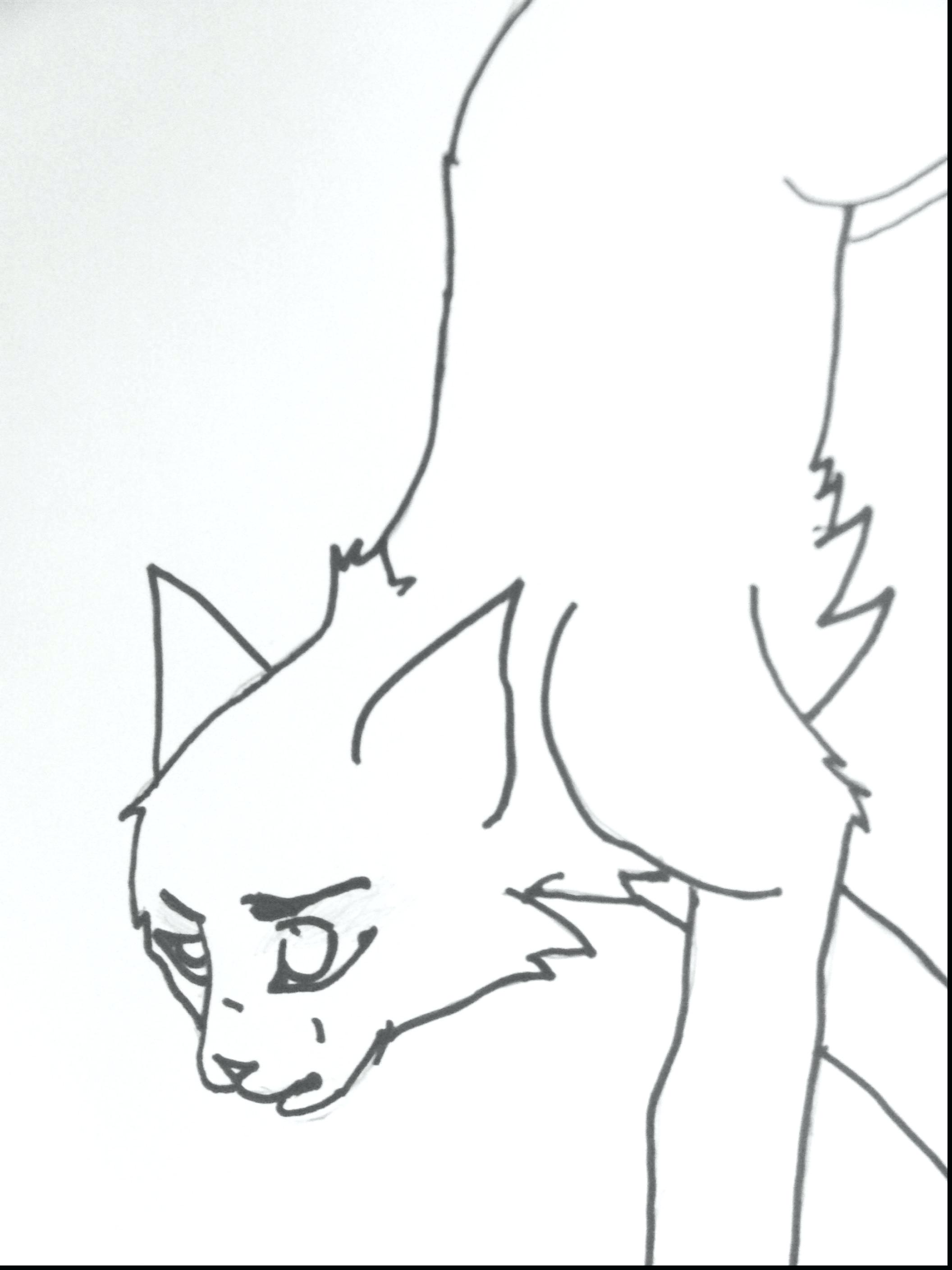 2112x2816 Printable Warrior Cats Coloring Pages Printable