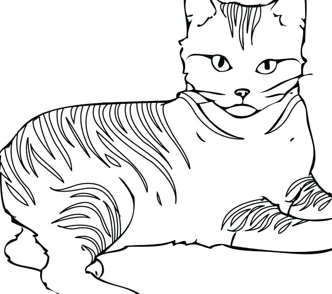 Warrior Cat Drawing Ideas at GetDrawings com | Free for