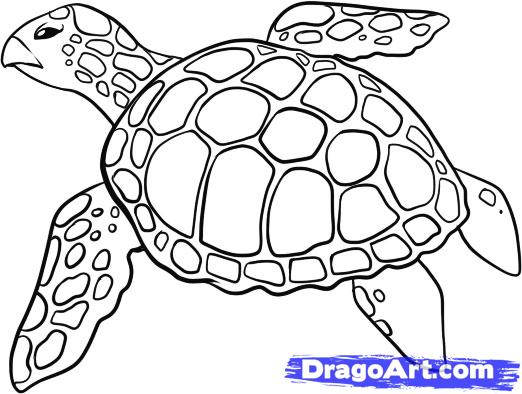 522x394 How To Draw A Sea Turtle, Step By Step, Sea Animals, Animals, Free