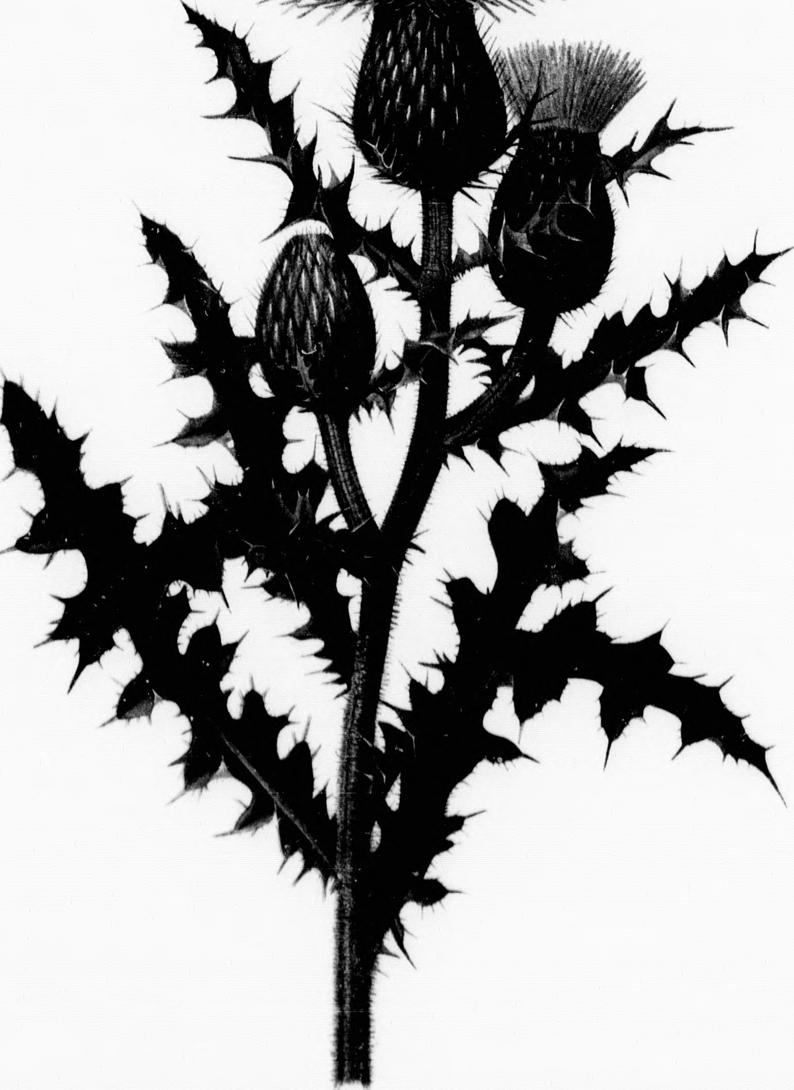 1548x2126 Fileflowers Of The Field And Forest (Microform)