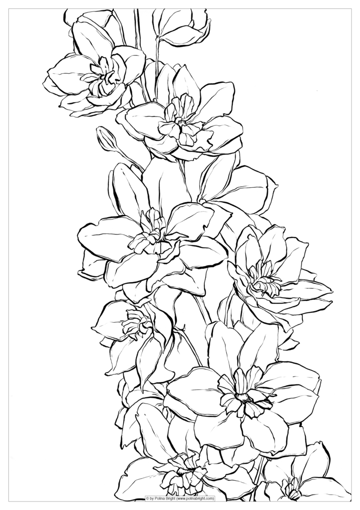 724x1024 Set Of Watercolor Coloring Pages Polina Bright Art