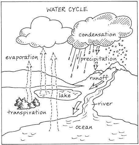 455x474 The Hydrologic Cycle Worksheets, Cycling And Water