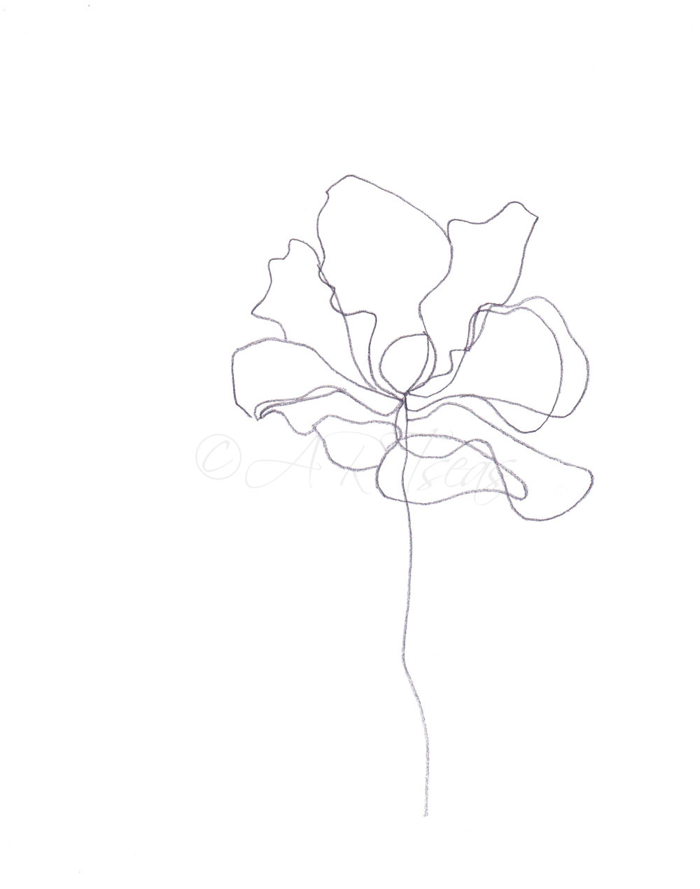 1000x1269 Abstract Minimalist Botanical Pencil Drawing Archival Art Print
