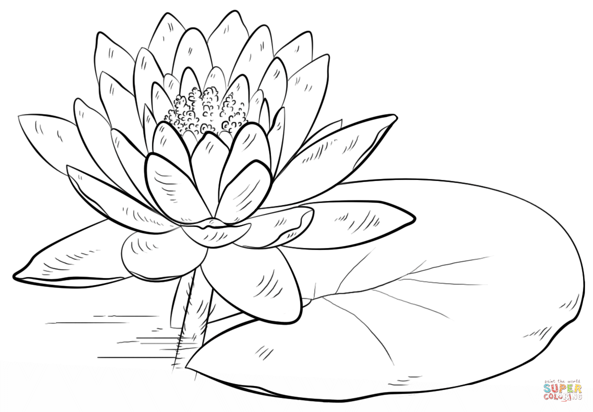 water effect drawing at getdrawings free for personal use Red Rose Life Cycle 1186x824 water lily and pad coloring page free printable coloring pages