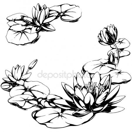 450x450 Water Lily Stock Vectors, Royalty Free Water Lily Illustrations