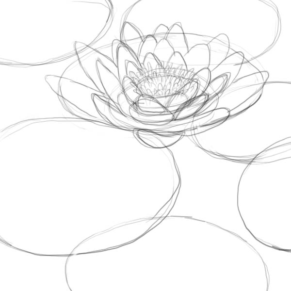 600x600 How To Draw A Lily Pad