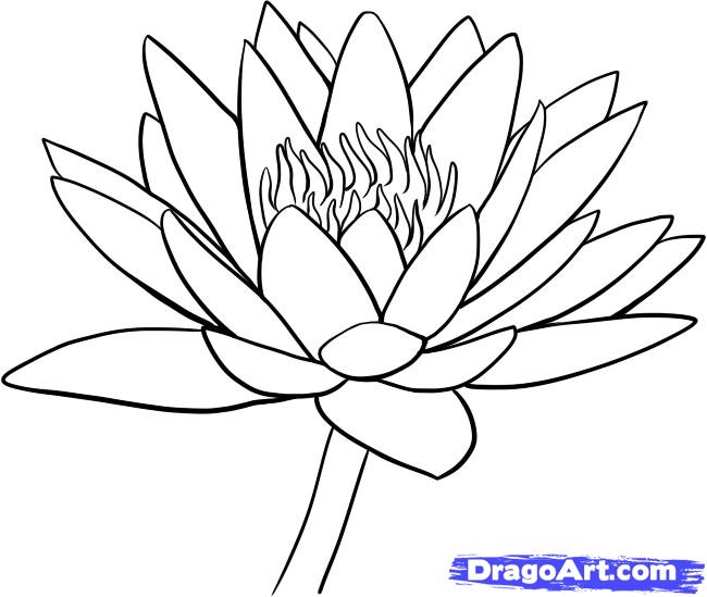 650x549 Lotus Flower Drawing How To Draw A Water Lily Step 9 Handmade