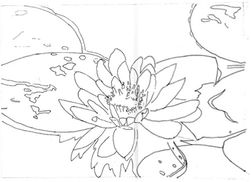 500x363 Sally's Water Lily
