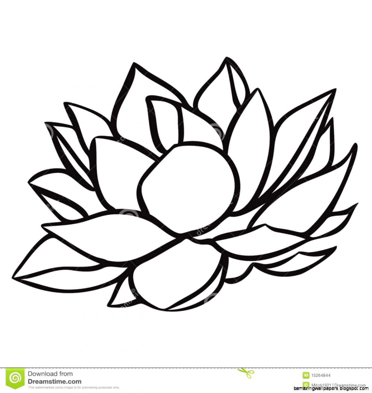 1222x1292 Simple Water Lily Drawing Amazing Wallpapers